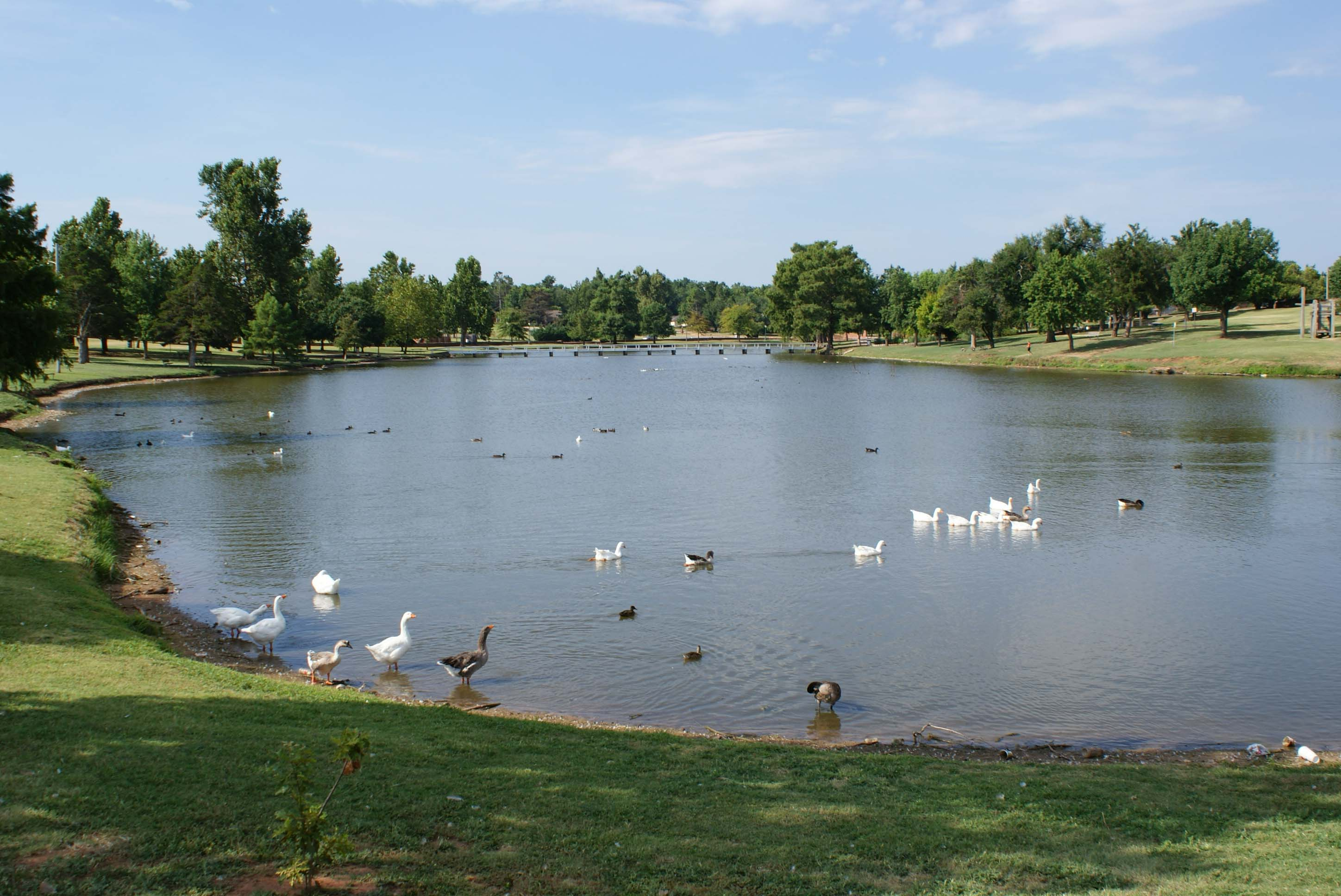 Shannon Springs Park Pond